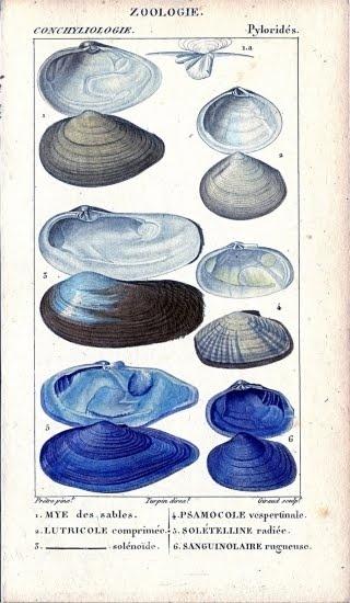 #seashells #shells #shoreline