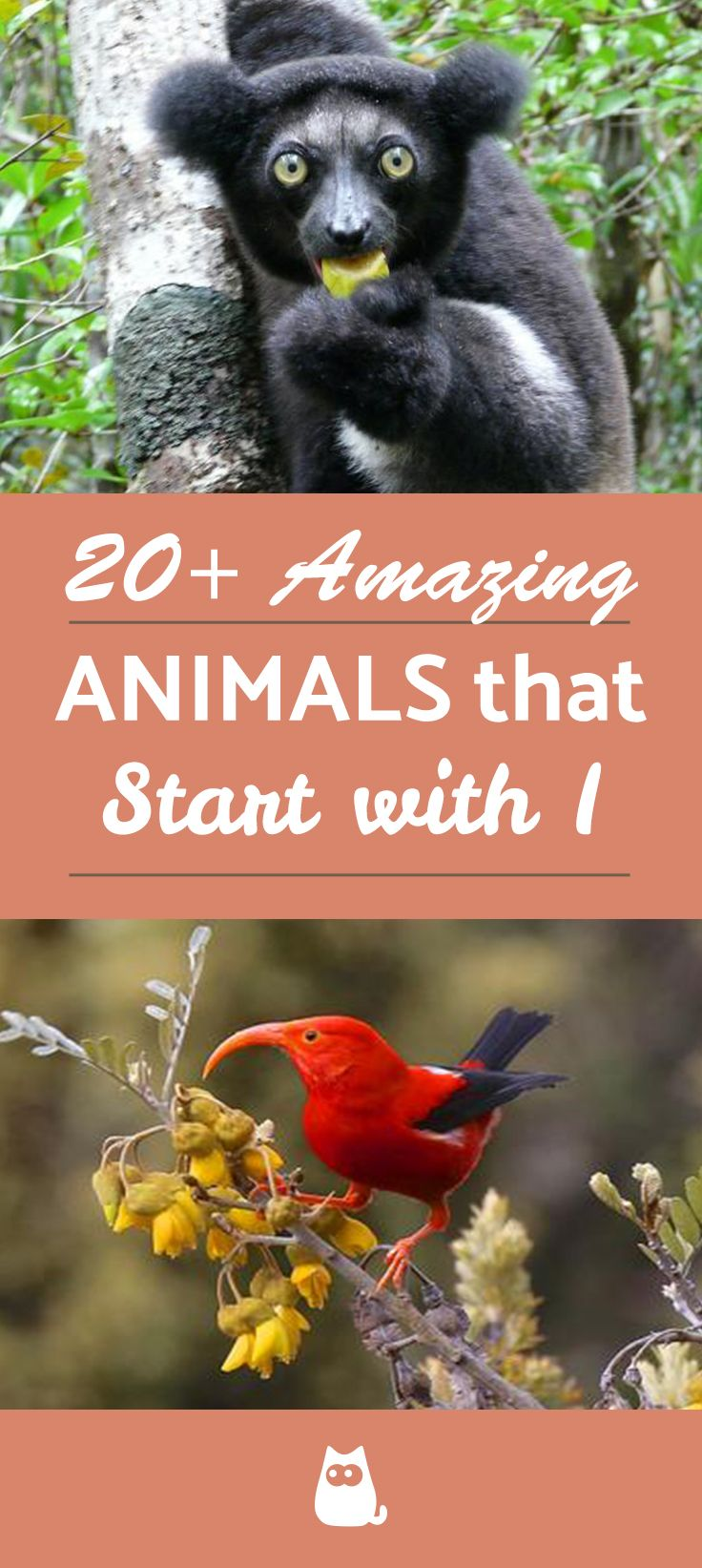 20 Amazing Animals Beginning With I