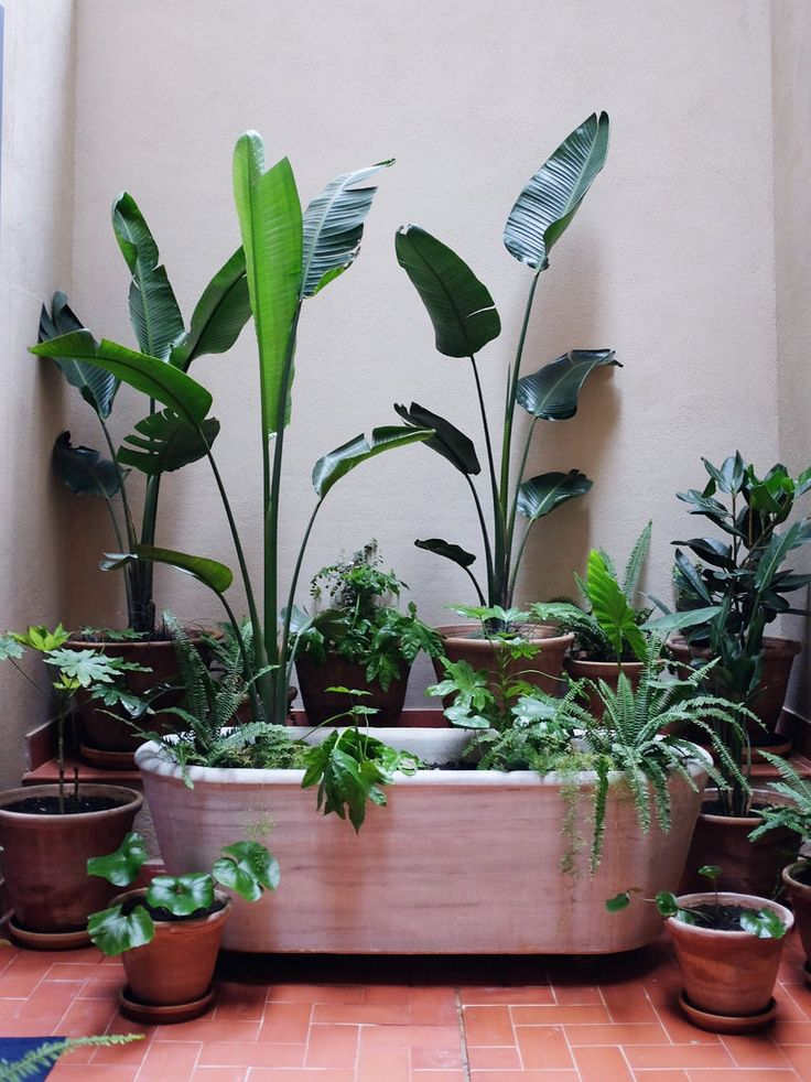 Inspiration For The Plants Wanted In The House U2013 In A Small Apartment,  And/or With No Outdoor Space .