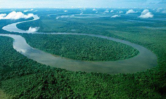 Sıra Amazonlar'da: Dünyanın en büyük ormanı yok edilmek isteniyor