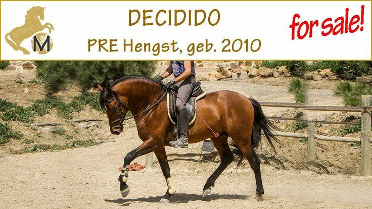 for sale in Spain: PRE stallion, nac. 2010, DECIDIDO