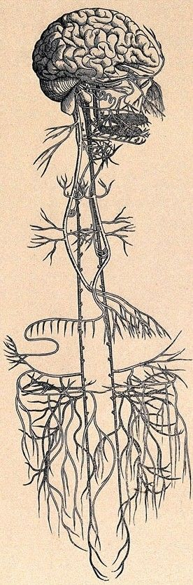Your Vagus Nerve, Ruler of Relaxation - Amaluna Acupuncture & Wellness