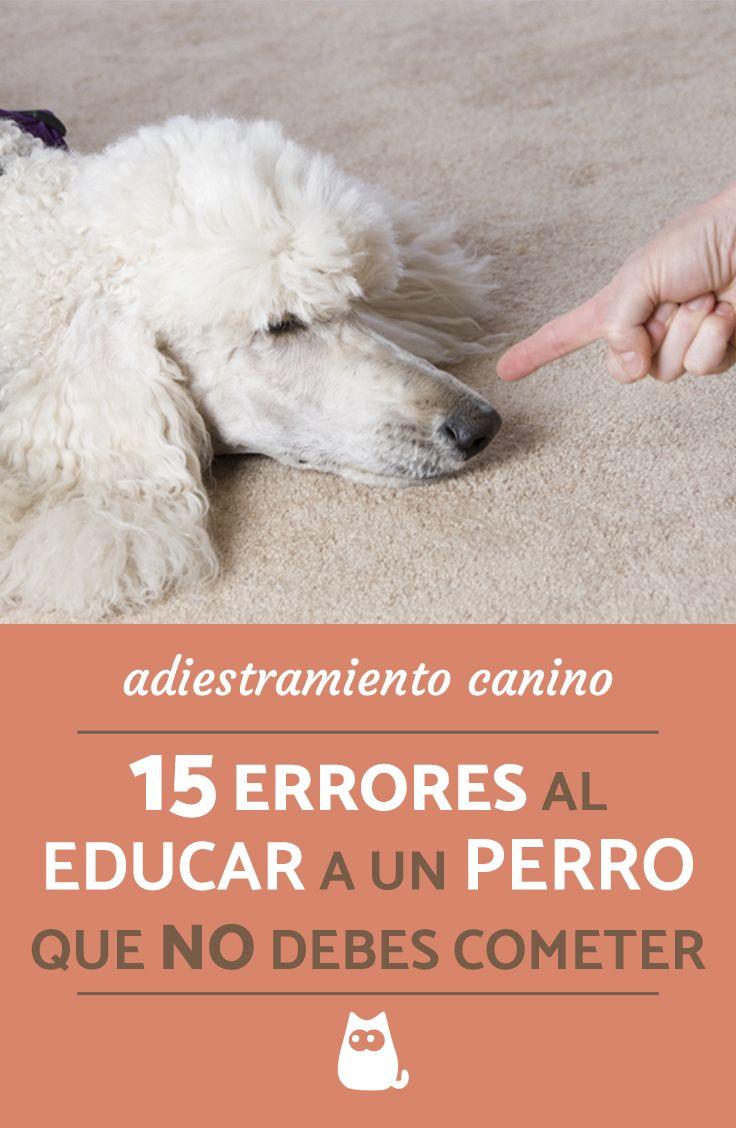 Estos Son Los Errores Más Comunes Al Adiestrar A Un Perro Que No Debes Cometer Expert Adiestramiento Perros Nombres Bonitos Para Perros Entrenamiento Perros