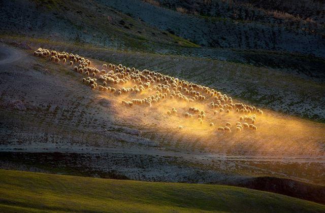 Toszkán mezők bárányai - 11 gyönyörű fotó