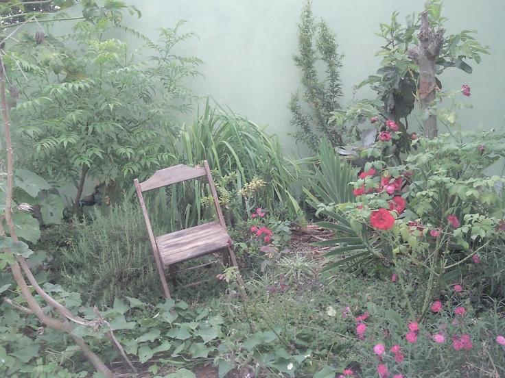 Vejo uma mensagem no jardim da mãe
