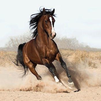 Bellas imagenes de caballos11