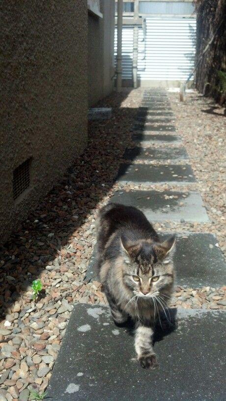 Do a little turn on Ryder catwalk.