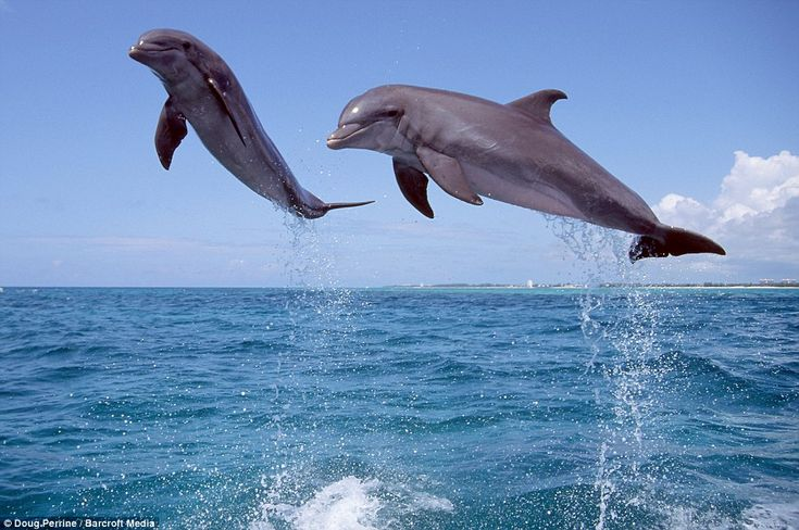 the wonderful lives and world of dolphins The free biology research paper (wonderful lives of dolphins essay) presented on this page should not be viewed as a sample of our on-line writing service if you need fresh and competent research / writing on biology, use the professional writing service offered by our company.