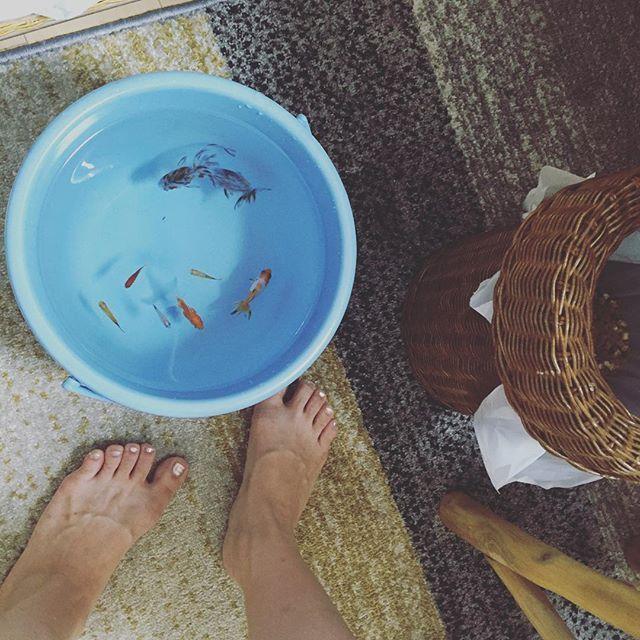 【meipopoyo】さんのInstagramをピンしています。 《休日の楽しみ🐠✨🐬✨ #金魚#goldfish #水換え#アクアリウム》