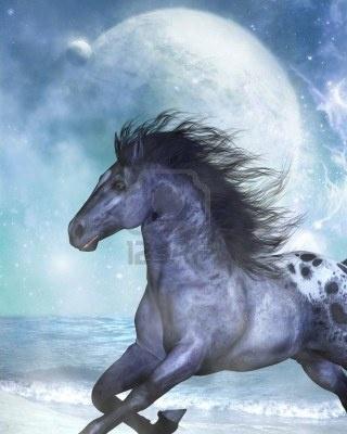 cavalli selvaggi al galoppo - Google-Suche: Google Image, Art Hors, Hors Art, Hors Gallop, Favorite Hors, Photo, Google Such, Hors Napkins, Wild Horses