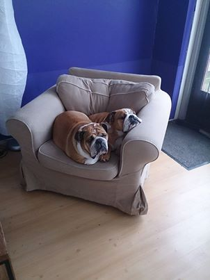 ❤ Limit 2 per chair --- Lola & Daisy ❤ Posted on Baggy Bulldogs NL