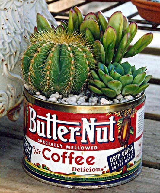mini jardim cactos suculentas : mini jardim cactos suculentas: Cactos E Suculentas no Pinterest