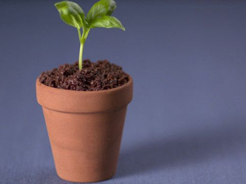 Heston puts a caramelised spin on the classic Italian dessert - and disguises it as a pot plant