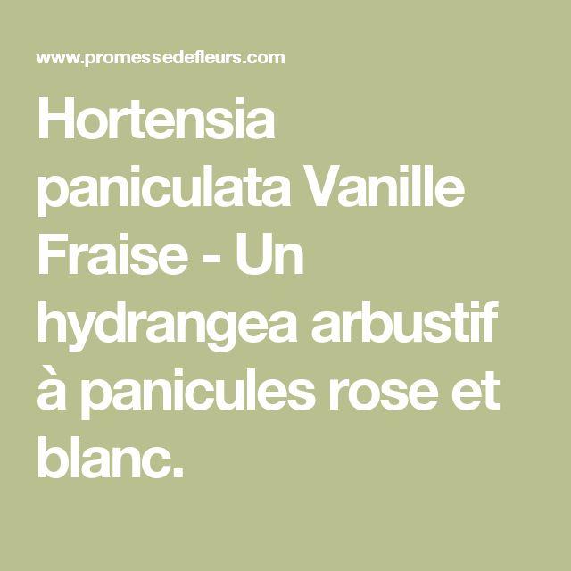 Hortensia paniculata Vanille Fraise - Un hydrangea arbustif à panicules rose et blanc.