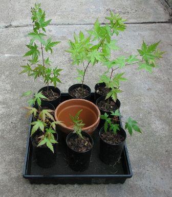 Self Watering Tray. Great idea for bottom watering new seedlings.
