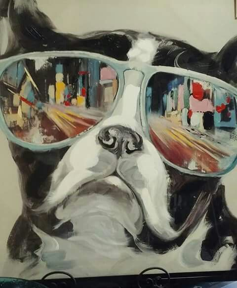 Boston terrier sunglasses picture