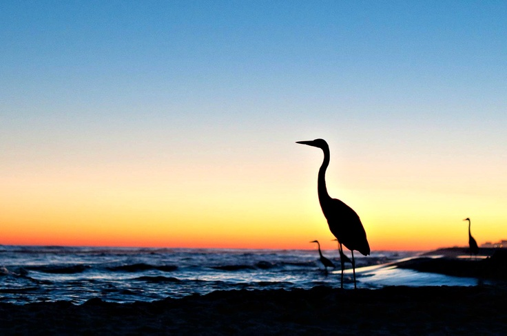1000 images about fishing in gulf shores on pinterest for Charter fishing gulf shores