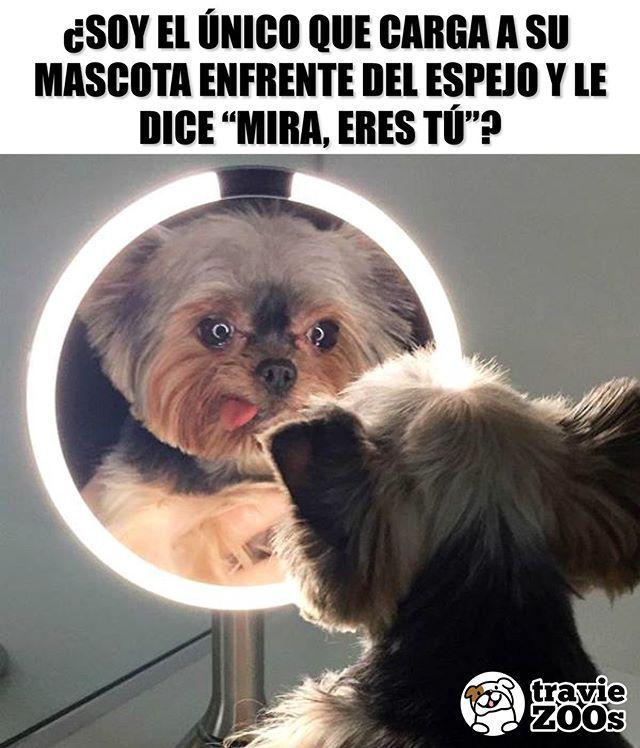 Admitelo Hasta Los Haces Pelear Entre Si Perros Dogs Espejo Mirror Reflejo Animal Memes Funny Animal Memes Funny Animals