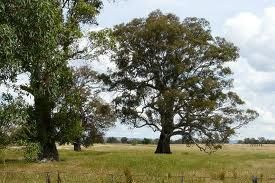 The Tanner's property bordered the Kelly's in Greta...  Ned Kelly's home Greta, nothing left now