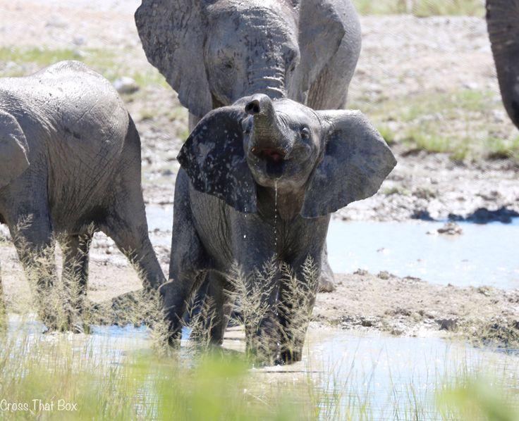 Baby elephant having a drink in Etosha!  http://crossthatbox.com