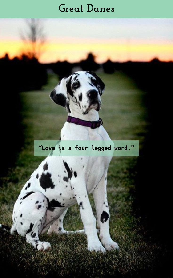 What Counts Is Not Necessarily The Size Of The Dog In The Fight