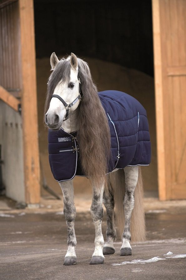 Country and Stable of Olney Limited - Rambo Medium Weight Stable Rug, £89.95 (http://www.countryandstable.co.uk/rambo-medium-weight-stable-rug/?gclid=CPeD6rPt7cgCFQ2NGwodr4ABVA/)