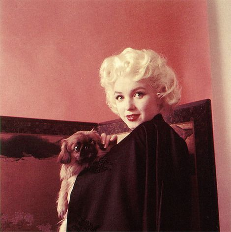 Marilyn Monroe posing with a Pekingese #Pekingese #Dog #PekeChic