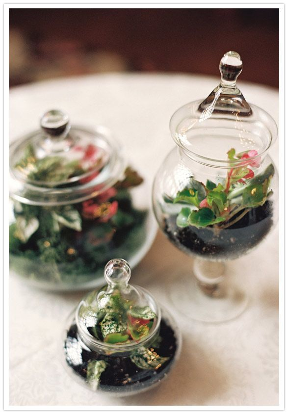 Little terrariums in glass containers for the centerpieces