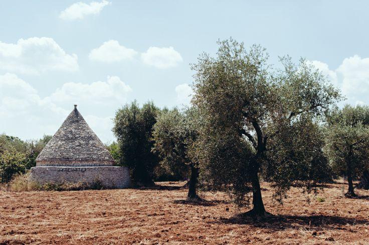 Olive trees and trulli.   Aberrazioni cromatiche photo courtesy