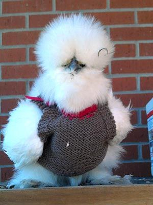 Tori Spelling seriously makes her pet chicken cute clothes to go with her vintage outfits| OMG...I think I just started to like Tori Spelling!