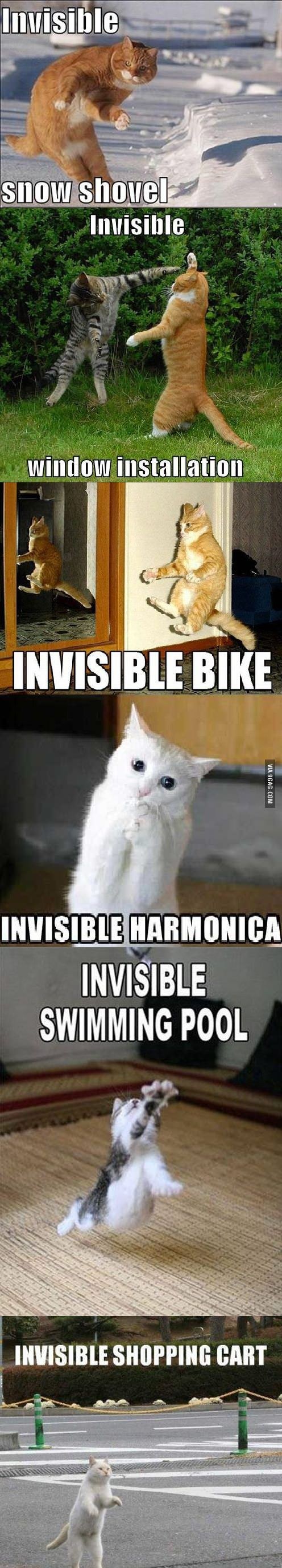 Invisible stuff and cats... Laughed waaaayyy harder than I probably should have