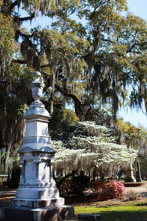 71 Best Selma Alabama Images On Pinterest Selma Alabama Dallas County And Abandoned Places