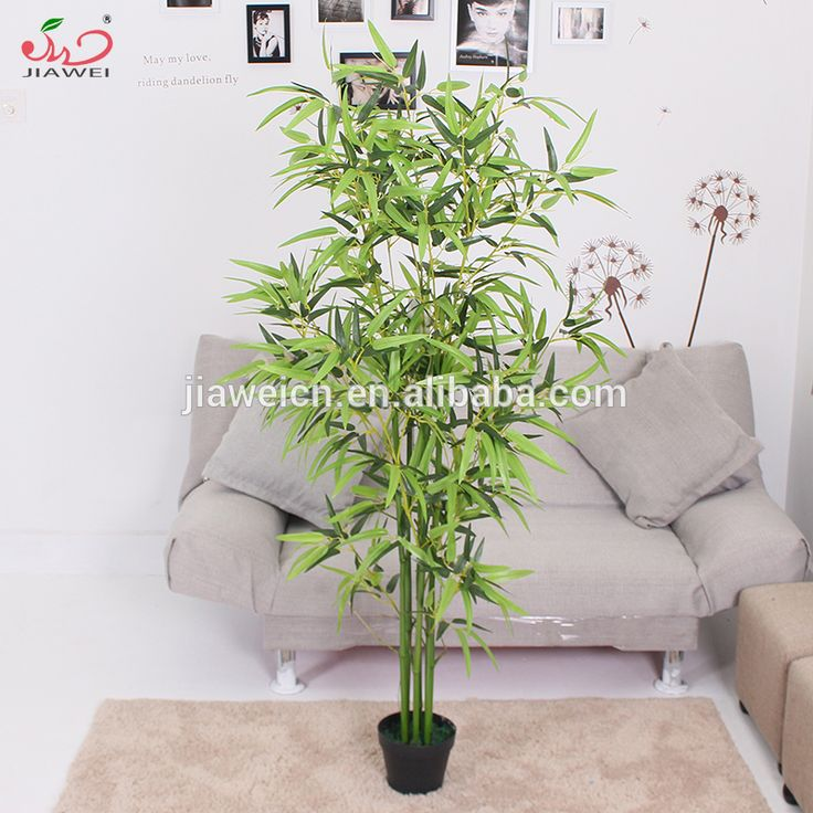 1000 ideas about lucky bamboo plants on pinterest bamboo plants lucky bamboo and indoor. Black Bedroom Furniture Sets. Home Design Ideas