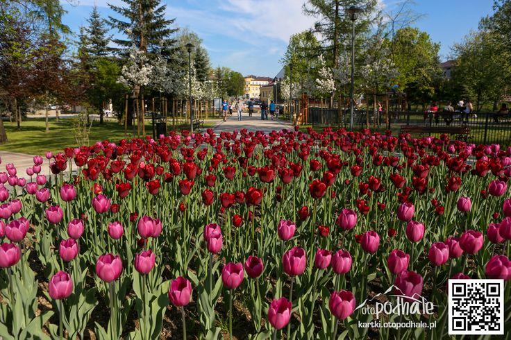 Park im. Adama Mickiewicza w Nowym Targu