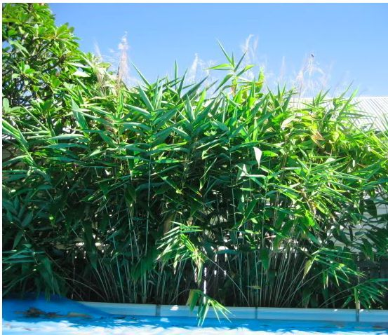 Image result for tiger grass fence