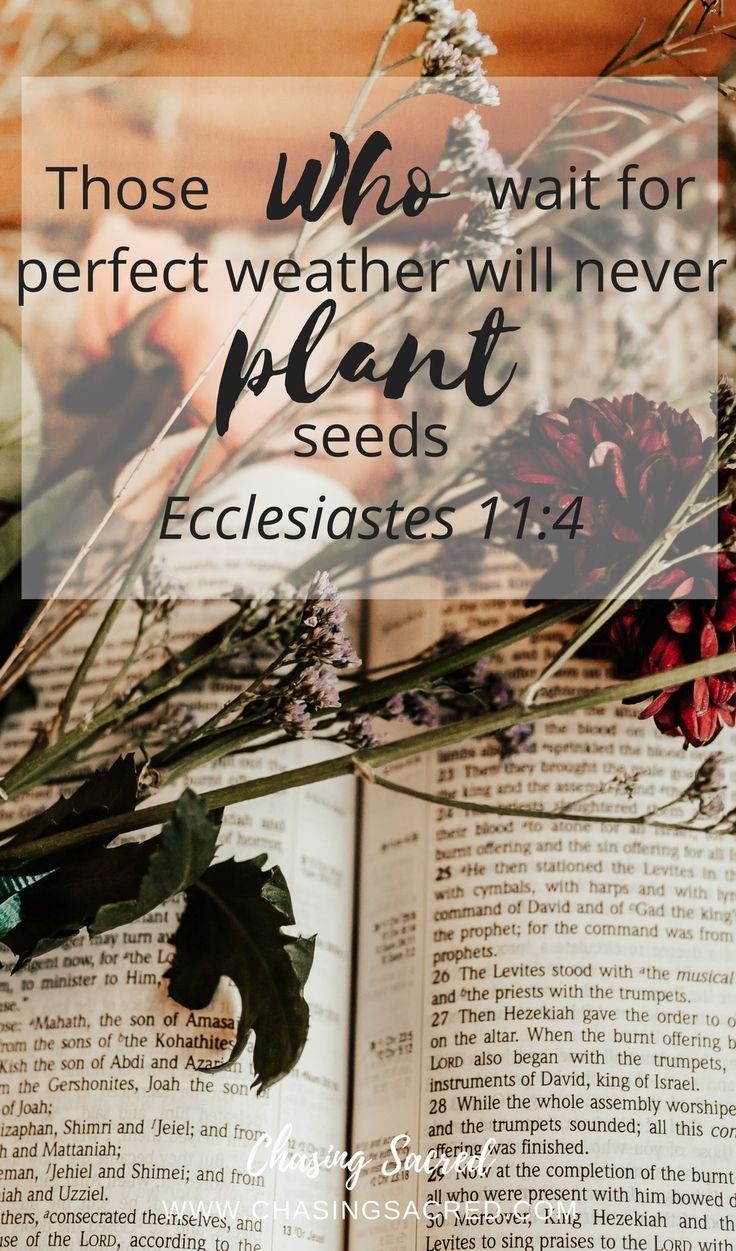 """""""Those who wait for perfect weather will never plant seeds"""" (Ecclesiastes 11:4) 