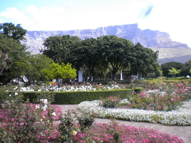 A walk through the Company Gardens