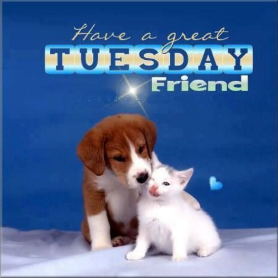 Image result for nice tuesday with pets