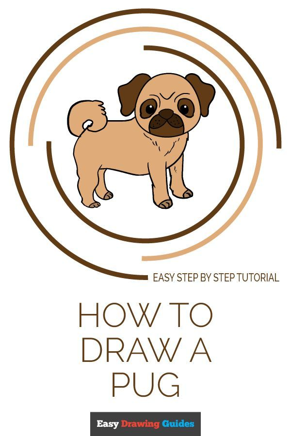 How To Draw A Pug Easy Drawings Drawings Drawing Tutorials For
