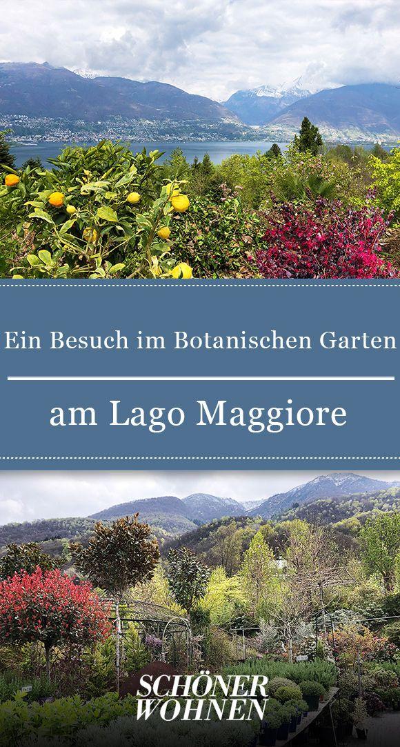 Botanischer Garten am Lago Maggiore | Pflanzen | Garten ...