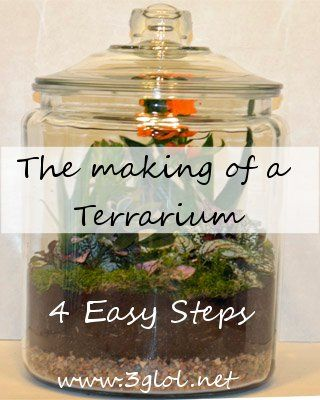 The Making of a Terrarium - 4 EASY Steps