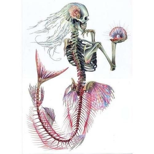 Skeletal mermaid tattoo idea?yes. Tatoo could be cool. I believe this is Jerry Jasper's work, hmmm, I wonder.