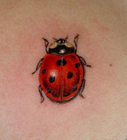 ladybug tattoo - I need this little guy to cover my current ladybug that was ruined by stretch marks...