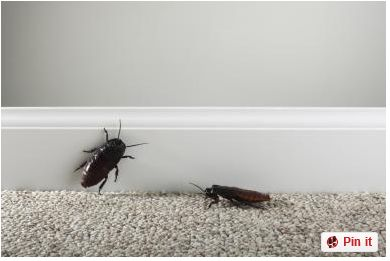 Get Rid of Roaches Naturally - Homemade Roach Killer