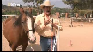 Hundeflüsterer Cesar Millan kommt gemeinsam mit seinem Kollegen Pat Parelli auf den Hof. Als Pferdeflüsterer versucht Pat, die Dinge auf der Koppel in Ordnung zu bringen, während sich Cesar wie gewohnt um die Hunde kümmert.