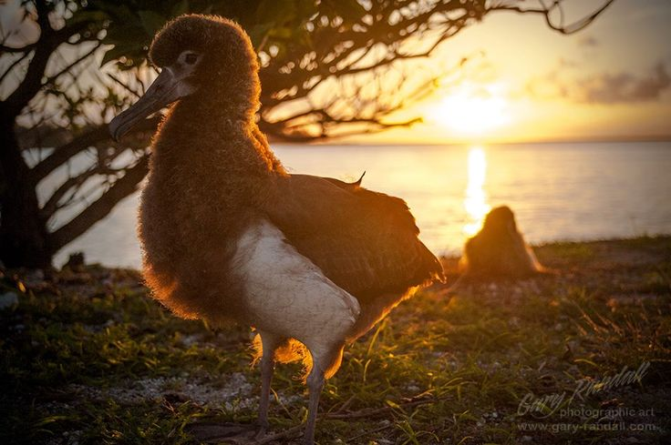 1000 Images About Midway Island On Pinterest Yahoo