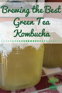 Home brewing green tea kombucha. This delicious, healthy alternative to soda and other sugary drinks.