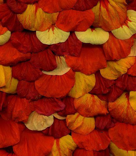 256 best orange color images on pinterest orange color. Black Bedroom Furniture Sets. Home Design Ideas