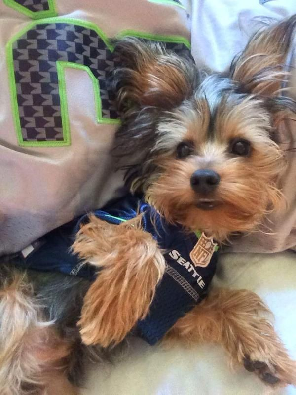 new product f9c3b 071a6 seattle seahawks jerseys for dogs