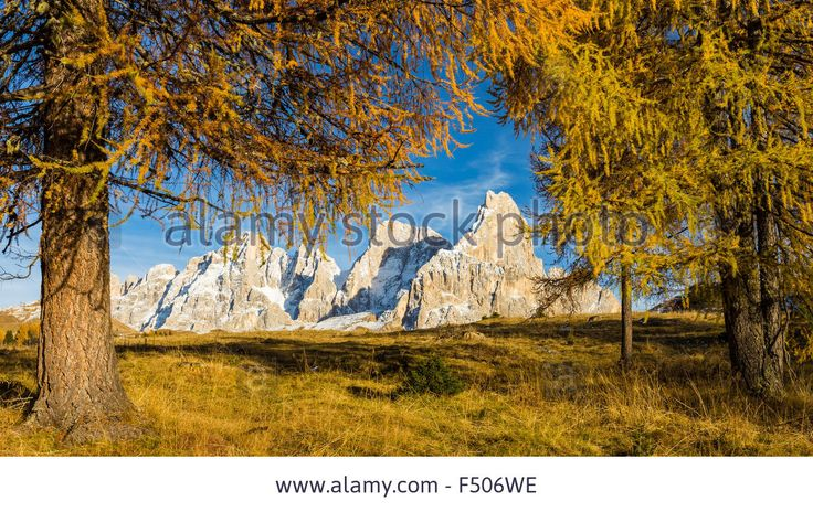 Autumn season. Larches and the Pale di San Martino massif, Dolomites. Stock Photo
